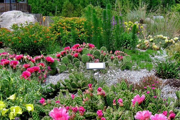 opuntias in garden