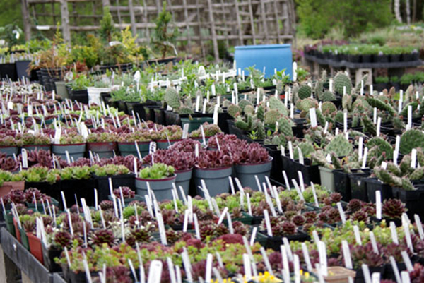 plants in pots with tags