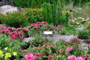 Anna's Perennials